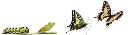 Transformation, die gelingt (Bildquelle: youareprior.com)
